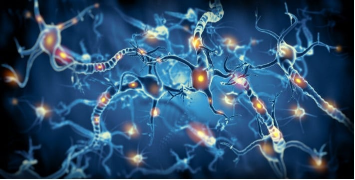 Nervous system essential information you need to know (2)