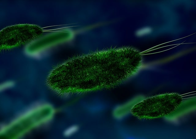 bacteria by webs health