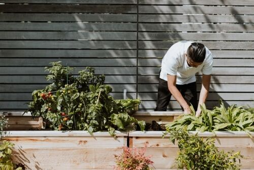 Home-gardening-tips-by-webs-health-
