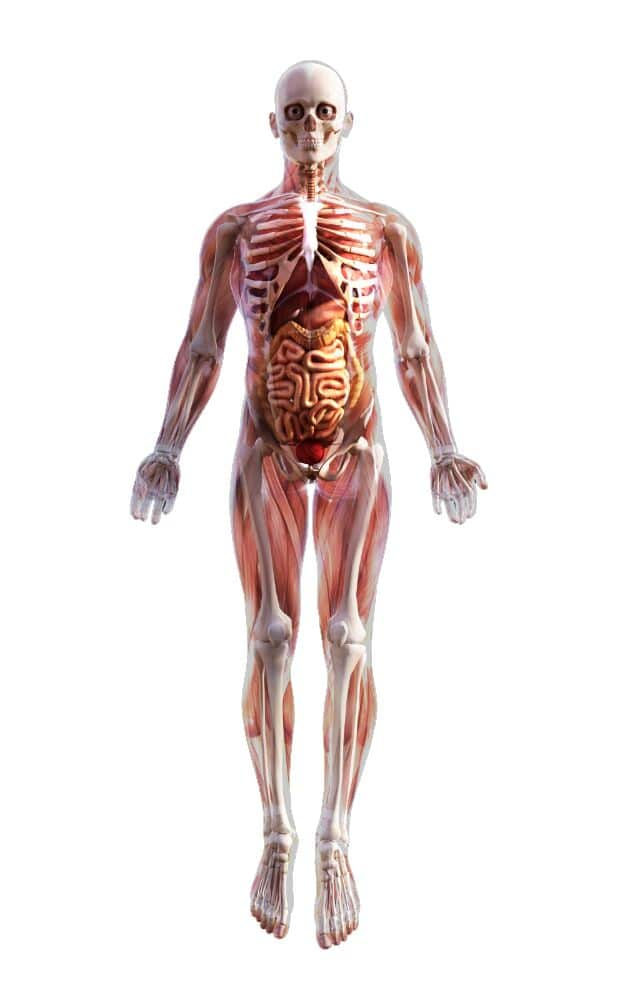 Discover-The-Human-Body-by-webs-health