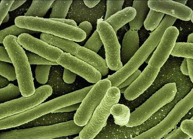 Pathogenic bacteria webs health - Webshealth