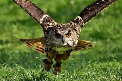 Fear of birds ornithophobia - Webshealth
