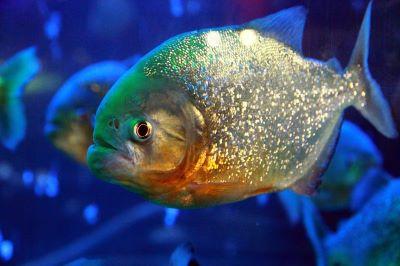 Fear of fish ichthyophobia - Webshealth