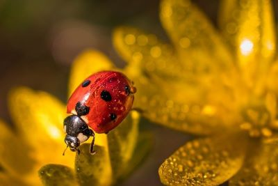 The fear of insects entomophobia - Webshealth