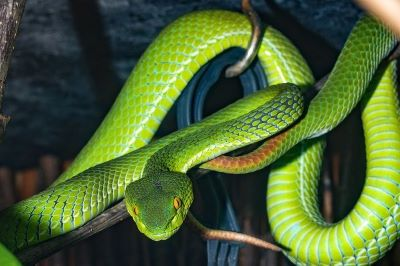The fear of snakes ophidiophobia - Webshealth